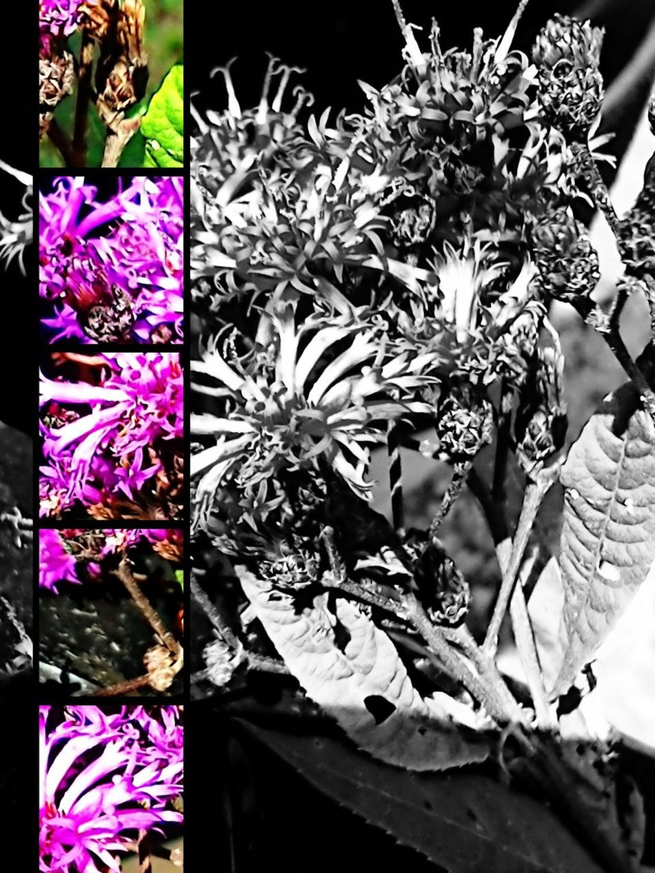 Purple Flowers Version 2 Photo Montage No People Flower Purple Close-up Plants And Flowers Purple Flower Green