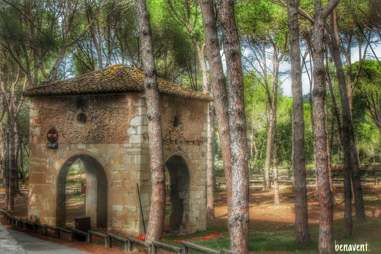 Llutxent Vall D'Albaida País De L'olivera Pinada