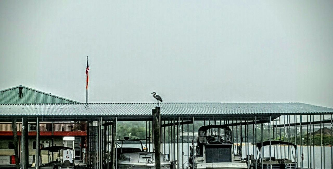 Bird Boats Boat Dock Water Tennessee River