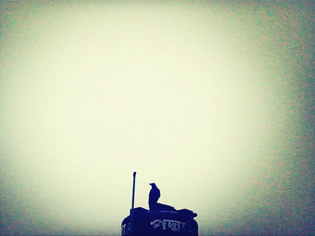kauua bird Taking Photos
