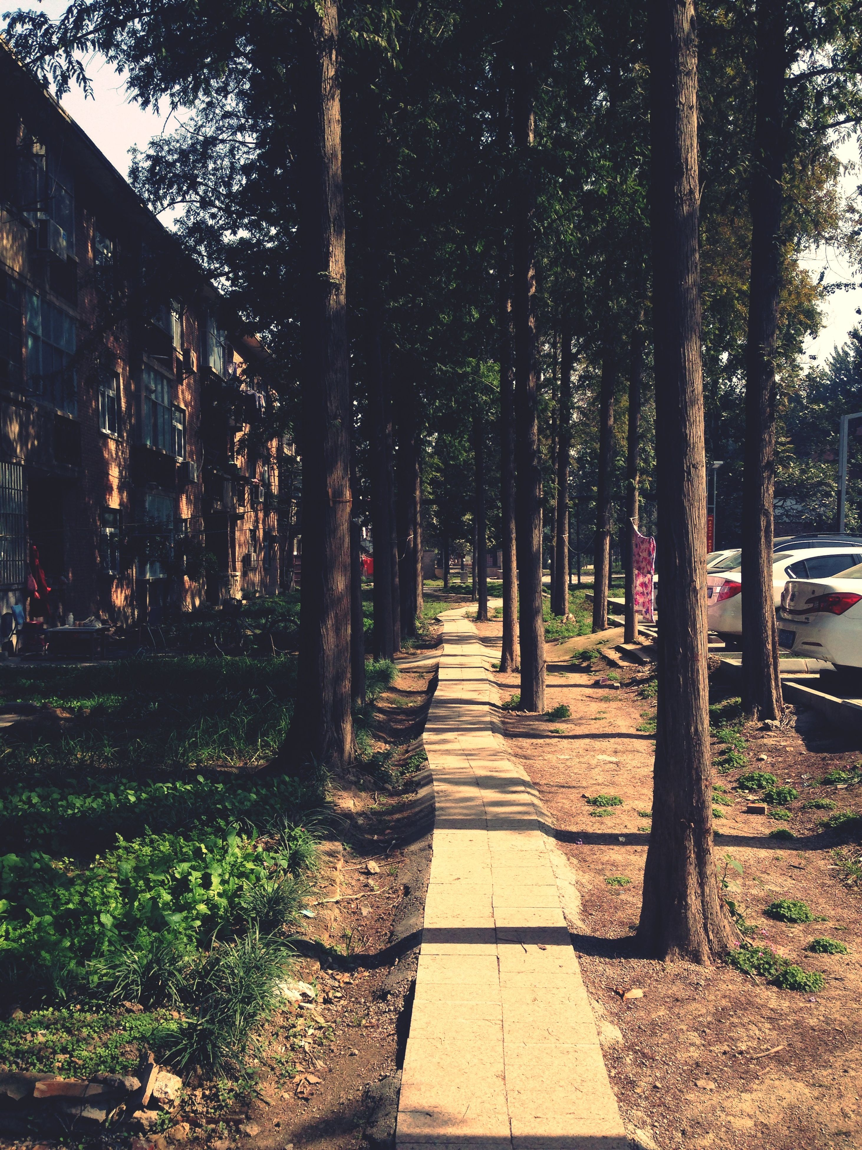 tree, the way forward, footpath, tree trunk, growth, treelined, walkway, diminishing perspective, street, transportation, shadow, sunlight, park - man made space, built structure, nature, outdoors, pathway, vanishing point, road, building exterior