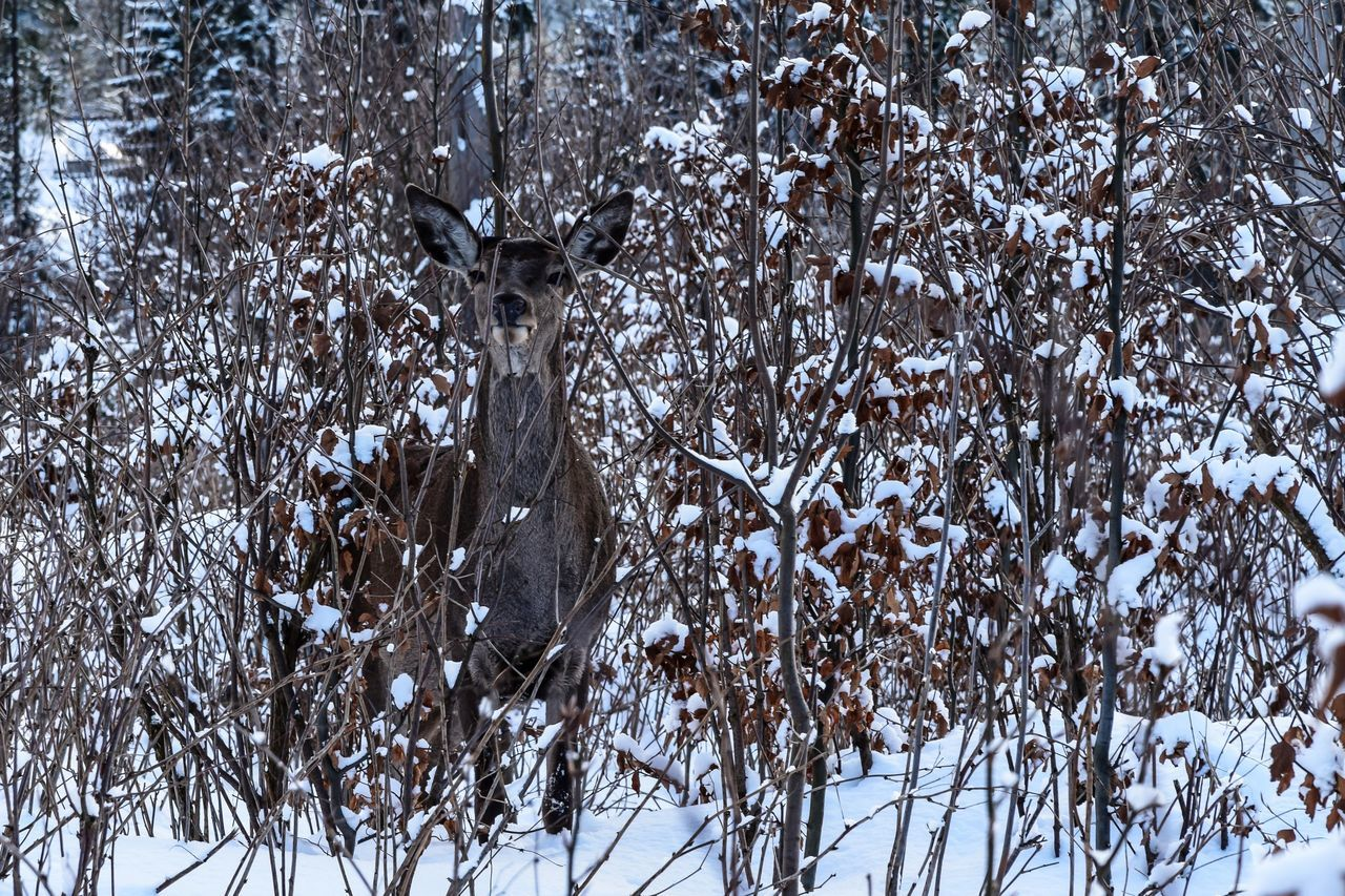 Roe Deer Animal Themes Animals In The Wild Tree Nature Cold Temperature Snow Beauty In Nature Winter Capture The Moment Scenics My Perspective EyeEm Nature Lover EyeEm Best Shots Beauty In Nature Beauty Tranquility Mountain First Eyeem Photo EyeEmNewHere Eye4photography  Zakopane Poland