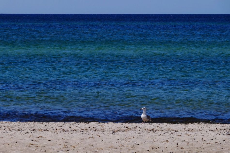 Seagull on the beach Sea Animal Themes One Animal Bird Horizon Over Water Water Beach Animals In The Wild Beauty In Nature Nature Animal Wildlife Outdoors Scenics Perching Sand Day No People Wave Sky Sand & Sea Seagull