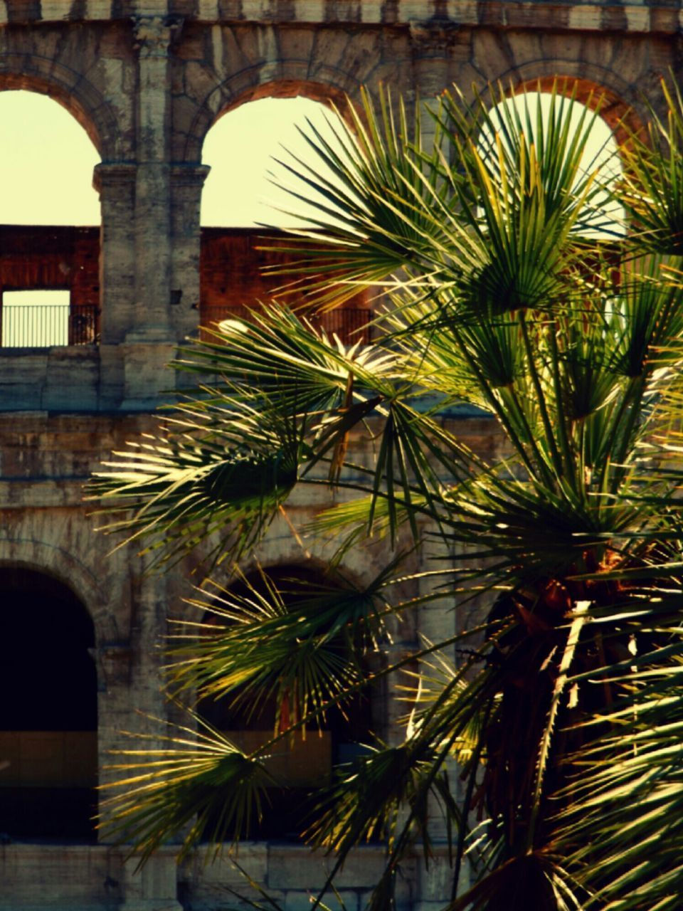 architecture, built structure, palm tree, outdoors, day, no people, tree, nature, close-up