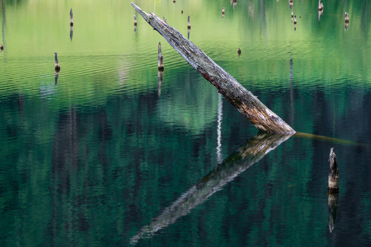 Lake Tree Forest Color Nature Log Water Pond Reflection Trees Landscacpe Scenics Outdoor