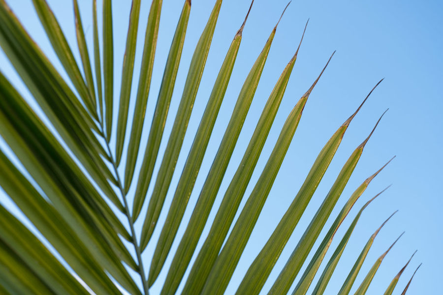 Green Color Growth Nature Outdoors Palm Leaves Plam Plant Sky Softness