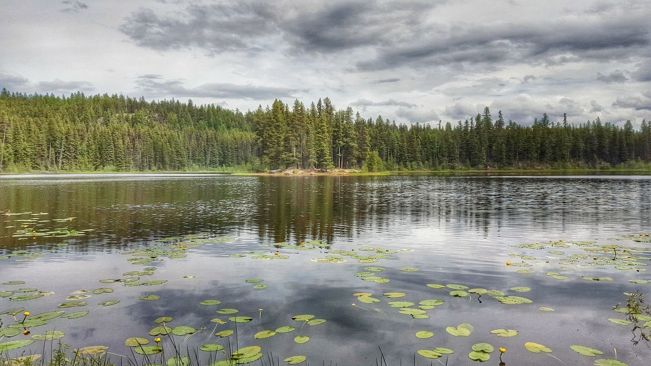 Landscapes Forest Creekside Landscape Tranquility Nature True Beauty Eyeem Best Shots - Canada Rich Colors EyeEm Best Shots - Nature Lake View EyeEm Nature Lover Old Memories First Eyeem Photo Secret Lake Cup Lake Natural Beauty Majestic Nature Green EyeEm Gallery