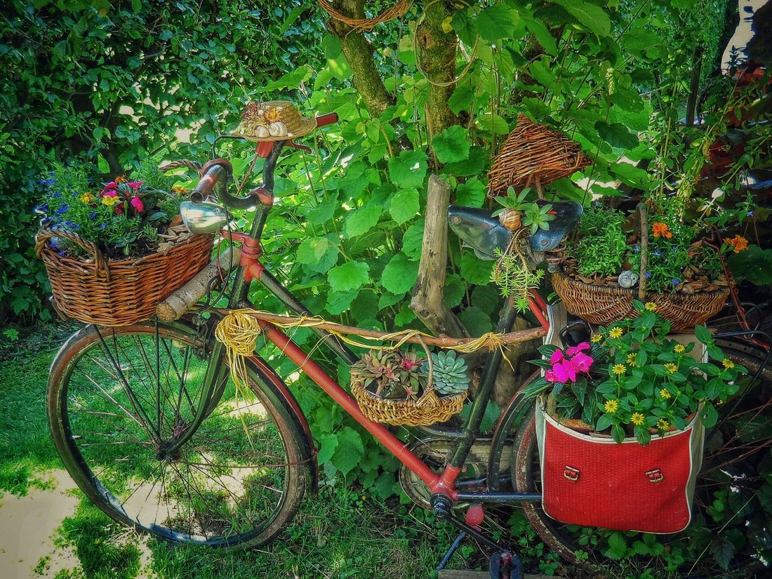 Secret Garden Garden Photography Eyeem Bycicle Bycicle Lovers Flowers Taking Photos Enjoying Life Take A Walk With Me EyeEm Nature Lover Seeing The Sights