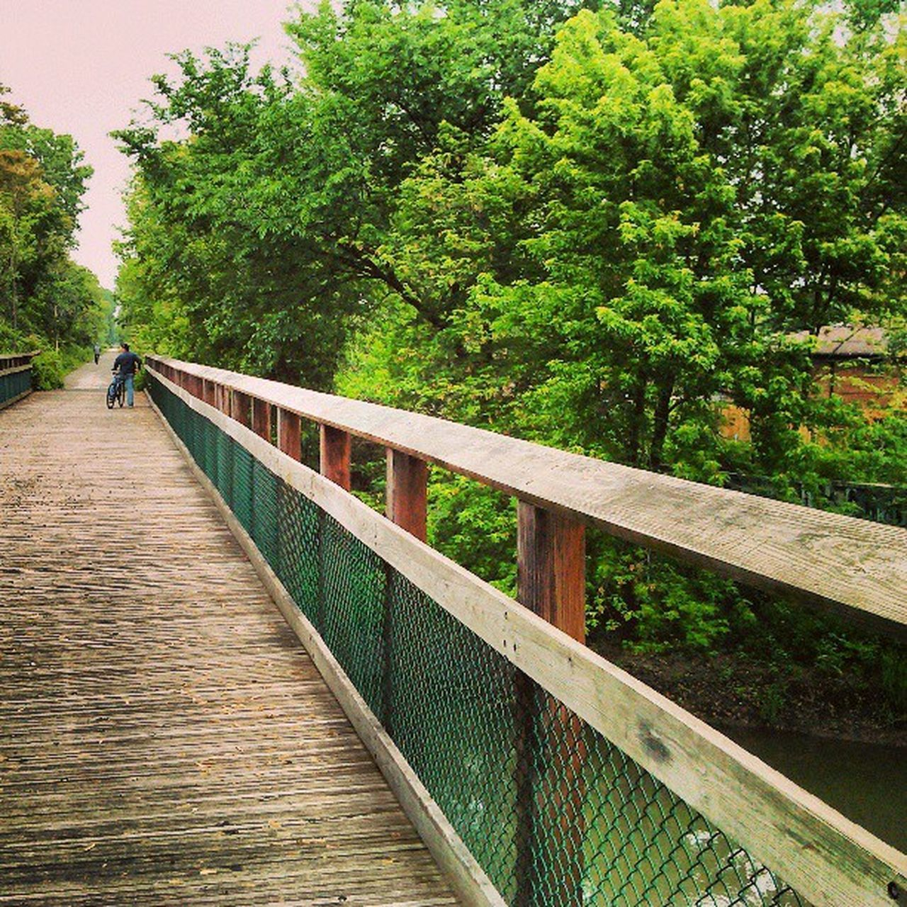 tree, railing, nature, green color, wood - material, day, outdoors, beauty in nature, footbridge, no people, growth, water, sky