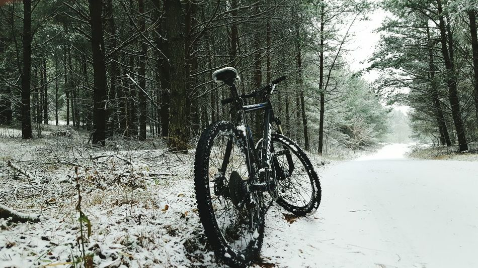 Winter forest , mtb tripi🤓 Bicycle Nature Day Snow - Covered Road Slippery Roads Extremesport