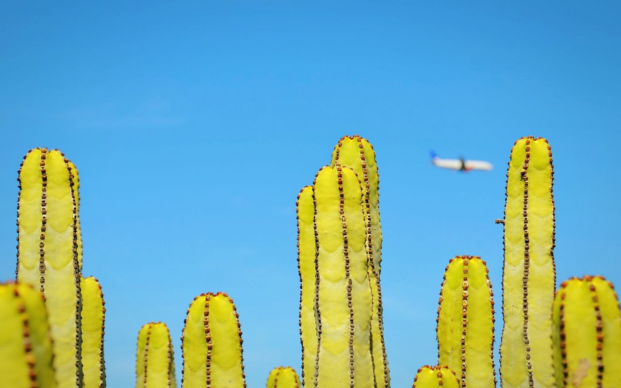 Natural skyline. Lemon Lime By Motorola & an Areoplane . Depht Of Field The Devil's In The Detail Getting Inspired Blue Sky EyeEm Gallery