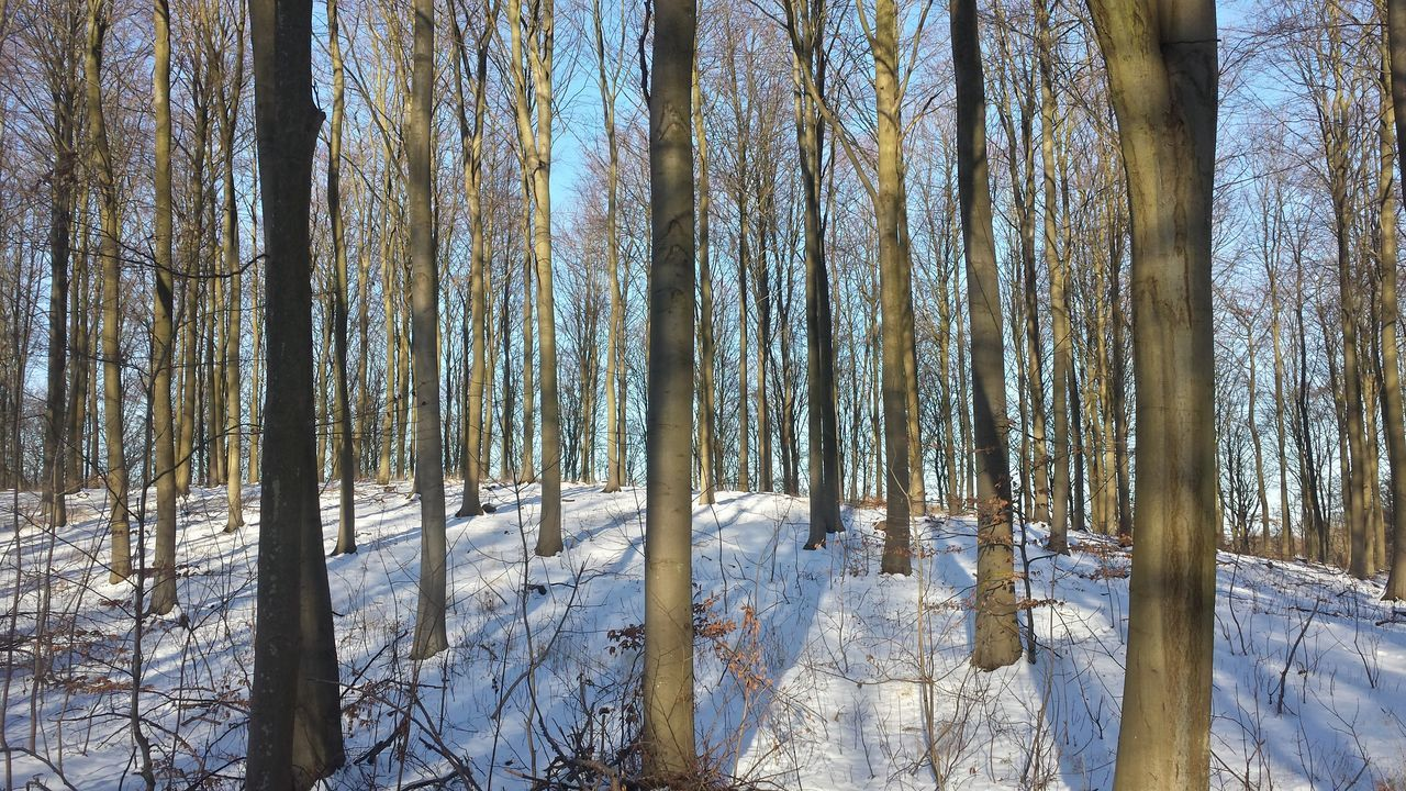 Out for a long walk for the view of winter landscape Tree Nature Full Frame No People Growth Beauty In Nature Day Backgrounds Scenics Outdoors Close-up Sky Silence Forest Photography Winterscapes Forest Dkphotography Nature_ Collection  Mobilephoto