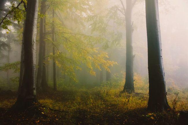 Landscape Eyem Best Shots Nature_collection Nature Enjoying Life EyeEm Nature Lover Eye4photography  Hello World Tree Taking Photos