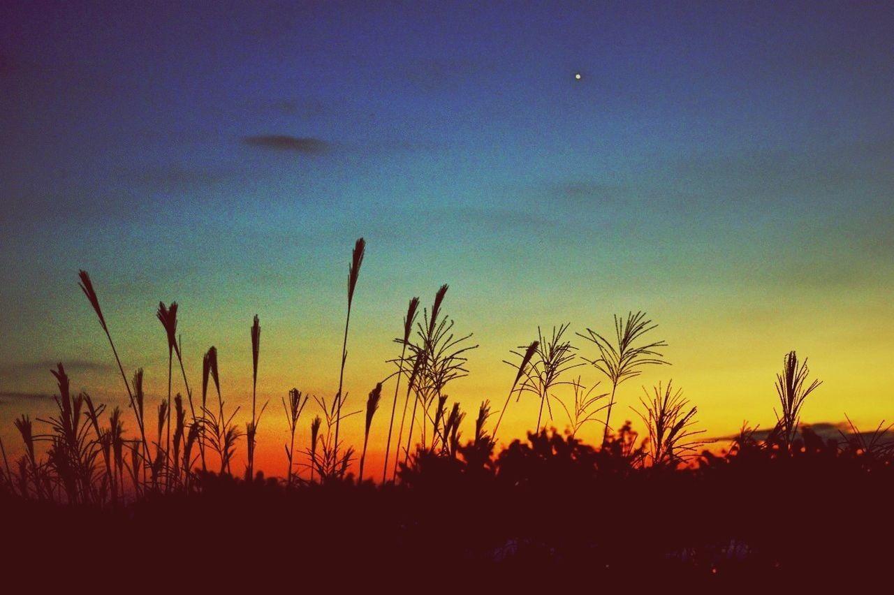 IPhoneography Clara Filter Sunset Beautiful