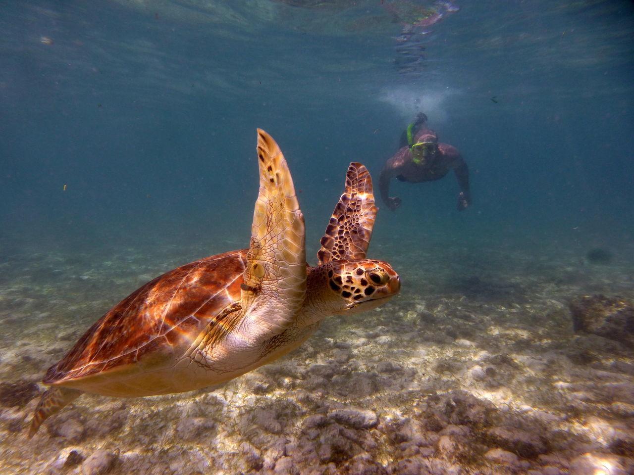 Turtle at Spotts beach Wildlifephotography Wildlife & Nature Animal Love Caribbean Cayman Caymanislands Outdoors Vacations Hawksbill Turtle Underwater Photography Turtle Spotts Beach