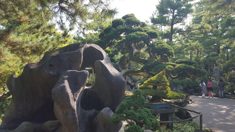 Korea Jejuisland Jeju Island, Korea Jejudo Jeju_island Jeju City Jeju-do Jeju-island