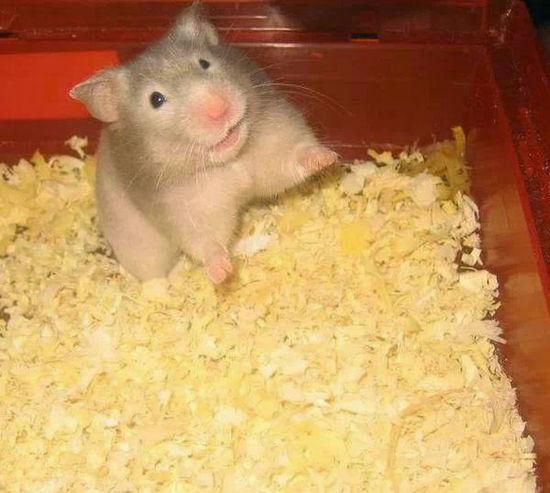 Hamster Love Hamstertime Hamster Hamster Baby