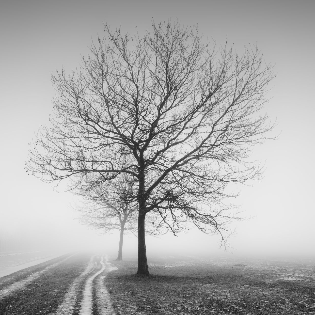 barren trees on a winter field Bare Tree Beauty In Nature Berlin Berliner Ansichten Black And White Black And White Photography Bnw Cold Temperature Day Fog Landscape Long Exposure Minimalism Monochrome Nature No People Outdoors Philipp Dase Scenics Spooky Tempelhofer Feld Tree Winter