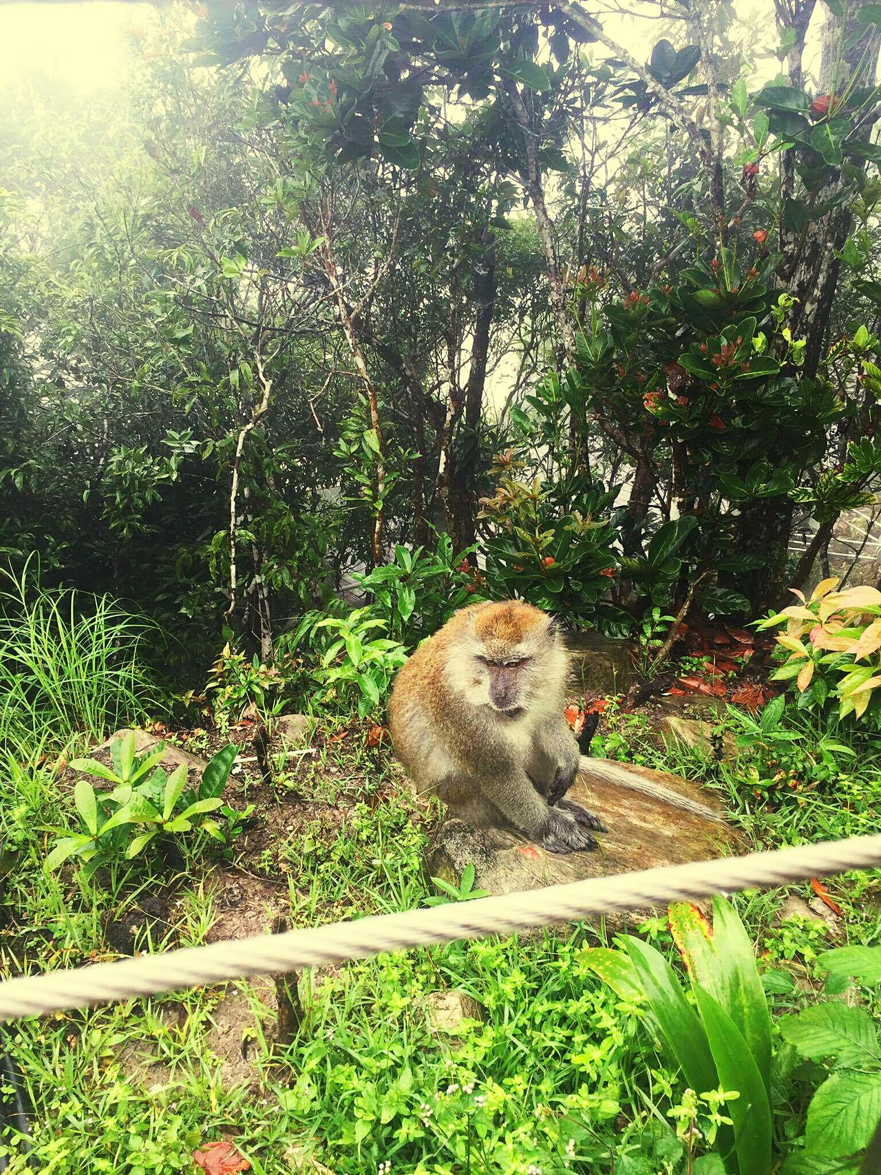 Animal Themes One Animal Tree Nature Animals In The Wild No People Animal Wildlife Outdoors Day Traveling Tourism Forest Wildlife Jungle Langkawai Malaysia Monkey