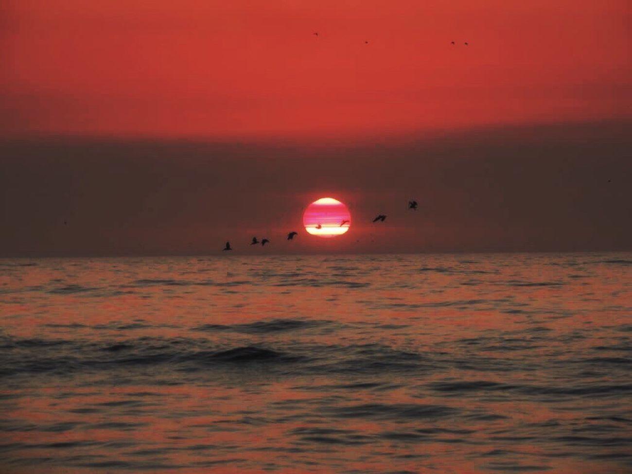 Sunset Today Amazing Sunset Sunset On The Beach Sunset And Sea Birds Flying At Sunset Sunset Pink Sunset_collection Sunset_captures Sunset Lovers Horizon Over Sea Idyllic Beauty In Nature Reñaca Beach , Chile