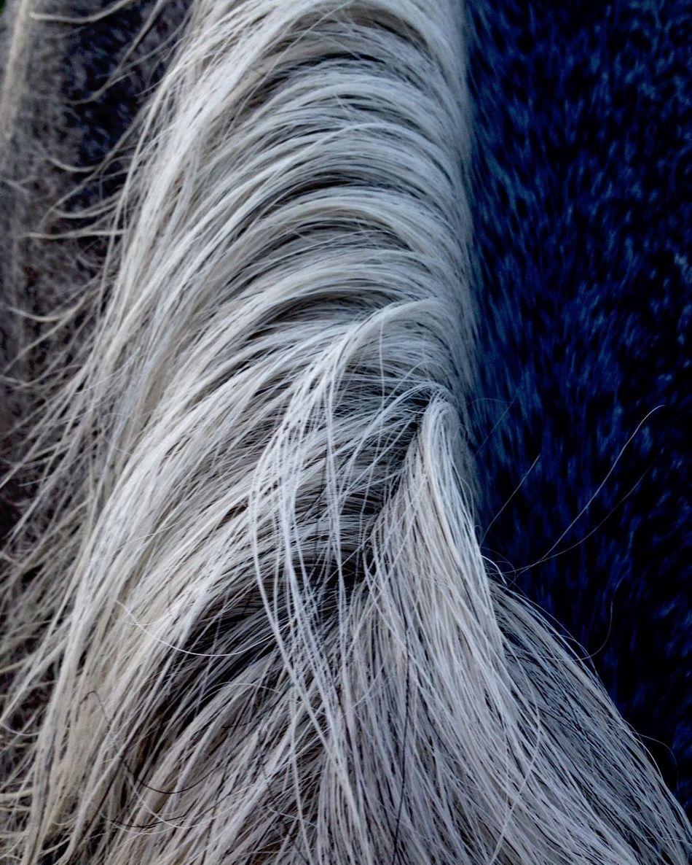 Horse At The Barn Gray