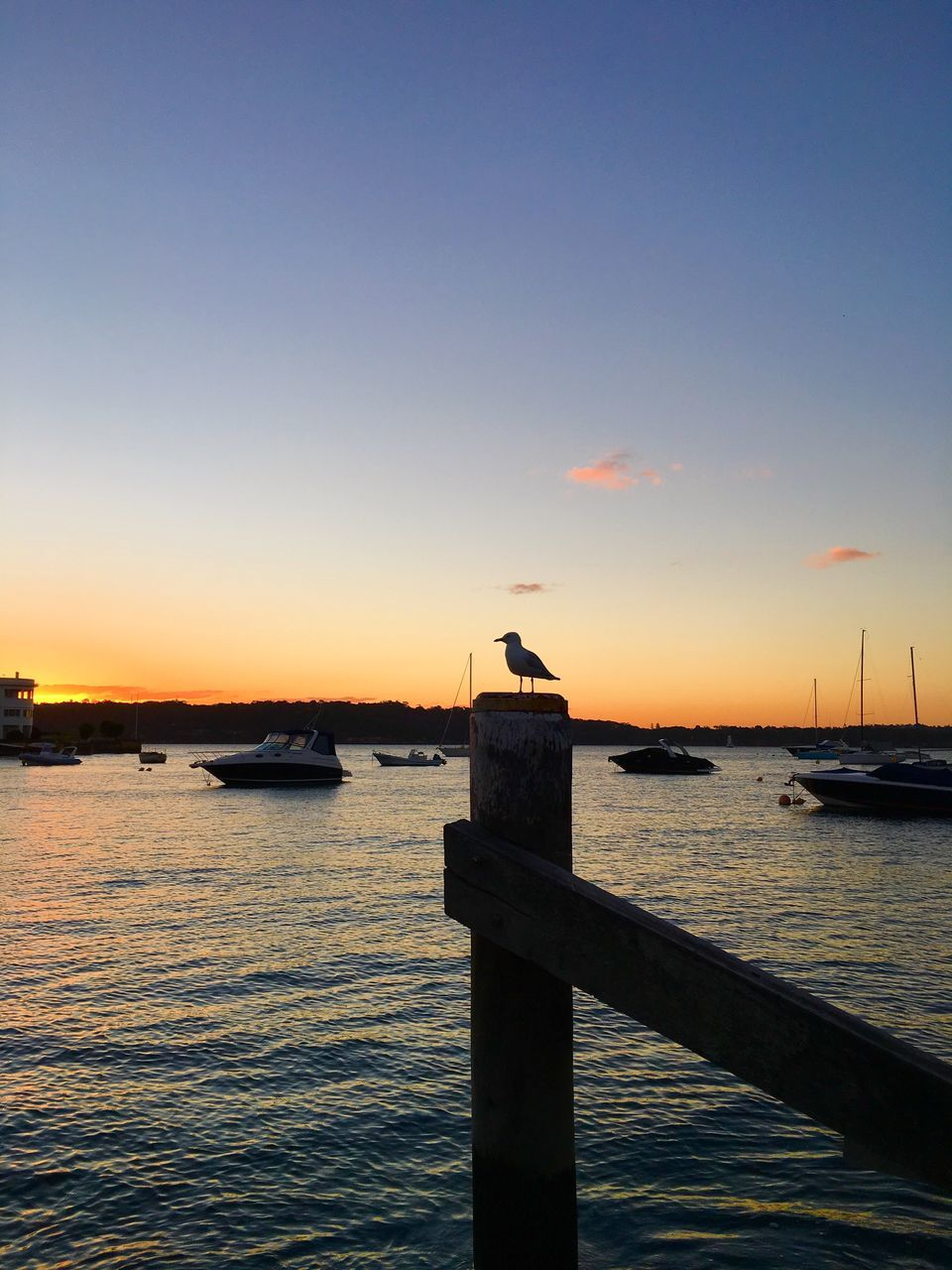 sunset, water, bird, animals in the wild, animal themes, nature, one animal, sea, silhouette, nautical vessel, sky, animal wildlife, no people, beauty in nature, tranquil scene, clear sky, tranquility, outdoors, scenics, sunlight, perching, seagull, day
