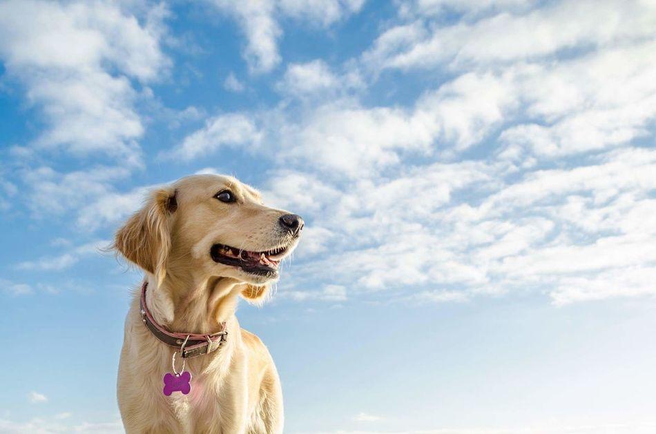 Beautiful stock photos of hunde,  Animal Themes,  Brown,  Cloud - Sky,  Color Image