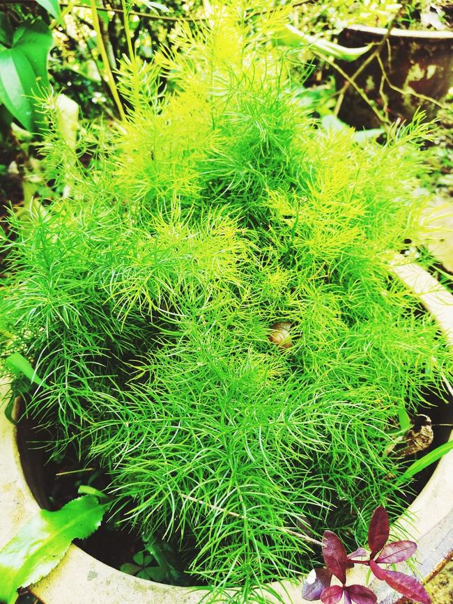 Green Color Plant Growth Beauty In Nature Freshness Outdoors Plant Life