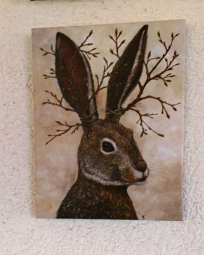 Rabbit Portrait Taking Photos Walking Around