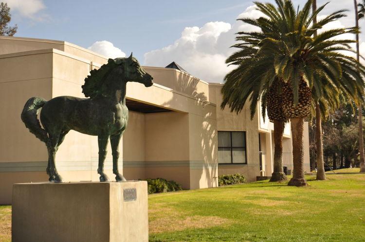 Sunny day #City #museum #ruleofthird Architecture Building Exterior Built Structure Horse Low Angle View Tritonmusem IheartSantaClara Santaclaracity Santaclara
