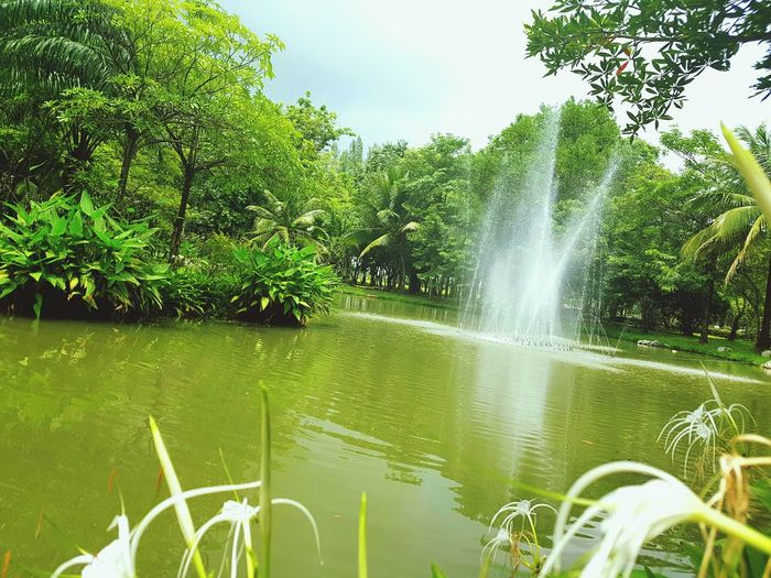 Green Nature Colour Of Life Relaxing Moments Green View In Kabinburi Thailand Nature Colors Naturephotography Nature Beauty Relaxing View Relaxing Place Enjoying Life Enjoying The Moment Enjoying The Colours