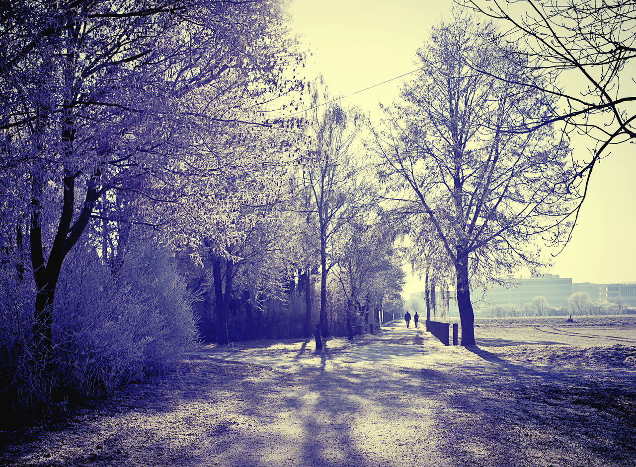tree, road, nature, outdoors, no people, tranquility, the way forward, bare tree, landscape, beauty in nature, day, branch, sky, scenics