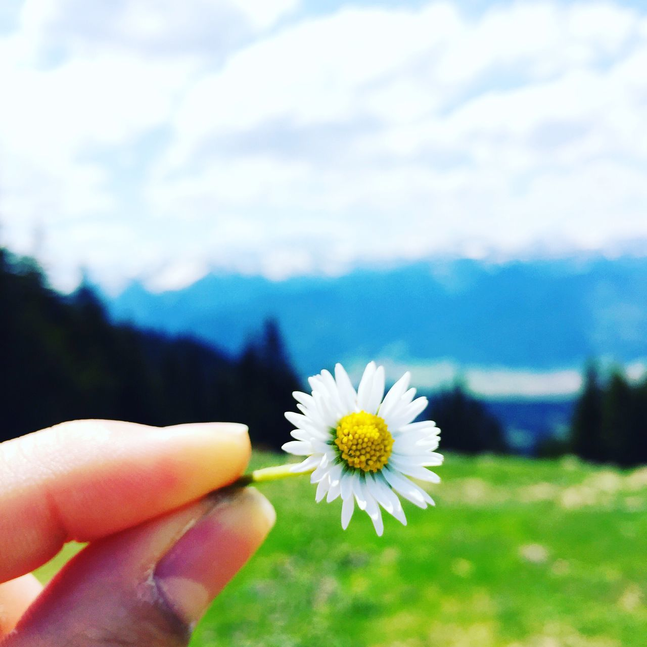 human hand, flower, nature, human body part, beauty in nature, one person, holding, fragility, real people, outdoors, petal, day, freshness, close-up, flower head, focus on foreground, growth, sky, people