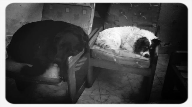 Pet life Pet Photography  Enjoying Life Dog Love Dog Sleeping