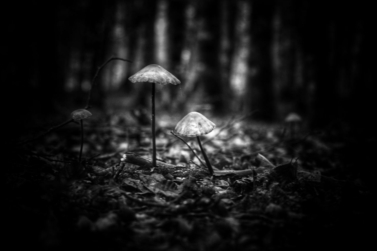 Mushroom Toadstool Fungus Nature Growth Forest Fly Agaric Beauty In Nature Fragility Selective Focus Outdoors Tranquility Uncultivated Close-up No People Day Freshness Fly Agaric Mushroom Monochrome Blackandwhite