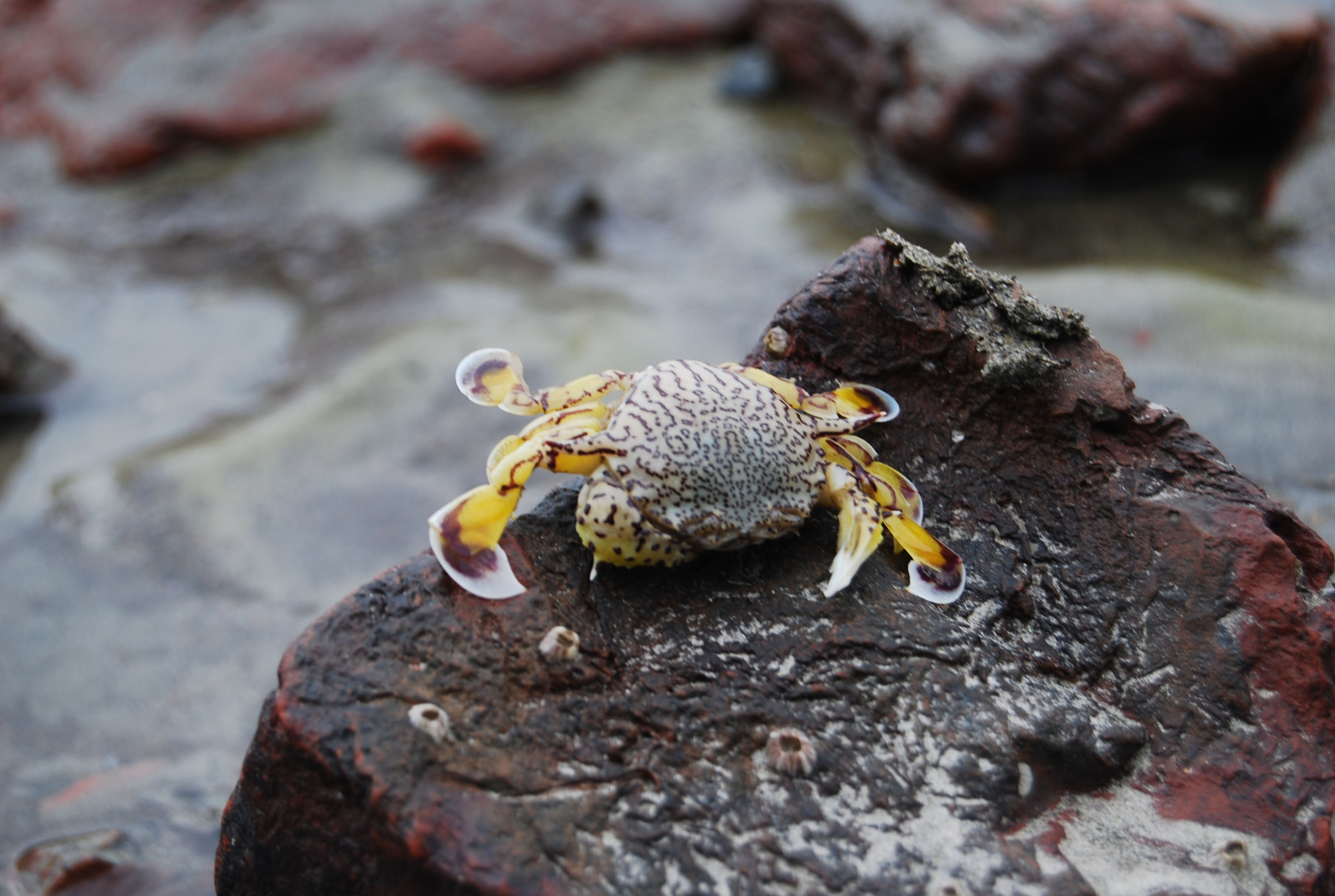 animal themes, animals in the wild, one animal, wildlife, close-up, focus on foreground, rock - object, nature, yellow, water, selective focus, outdoors, day, beauty in nature, no people, rock, insect, zoology, high angle view, full length