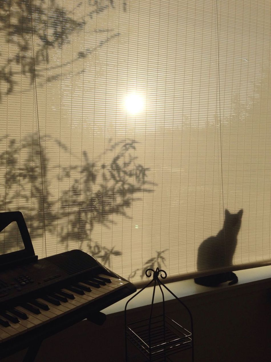 Beautiful stock photos of keyboard, Auto Post Production Filter, Backlit, Cat Sitting, Day