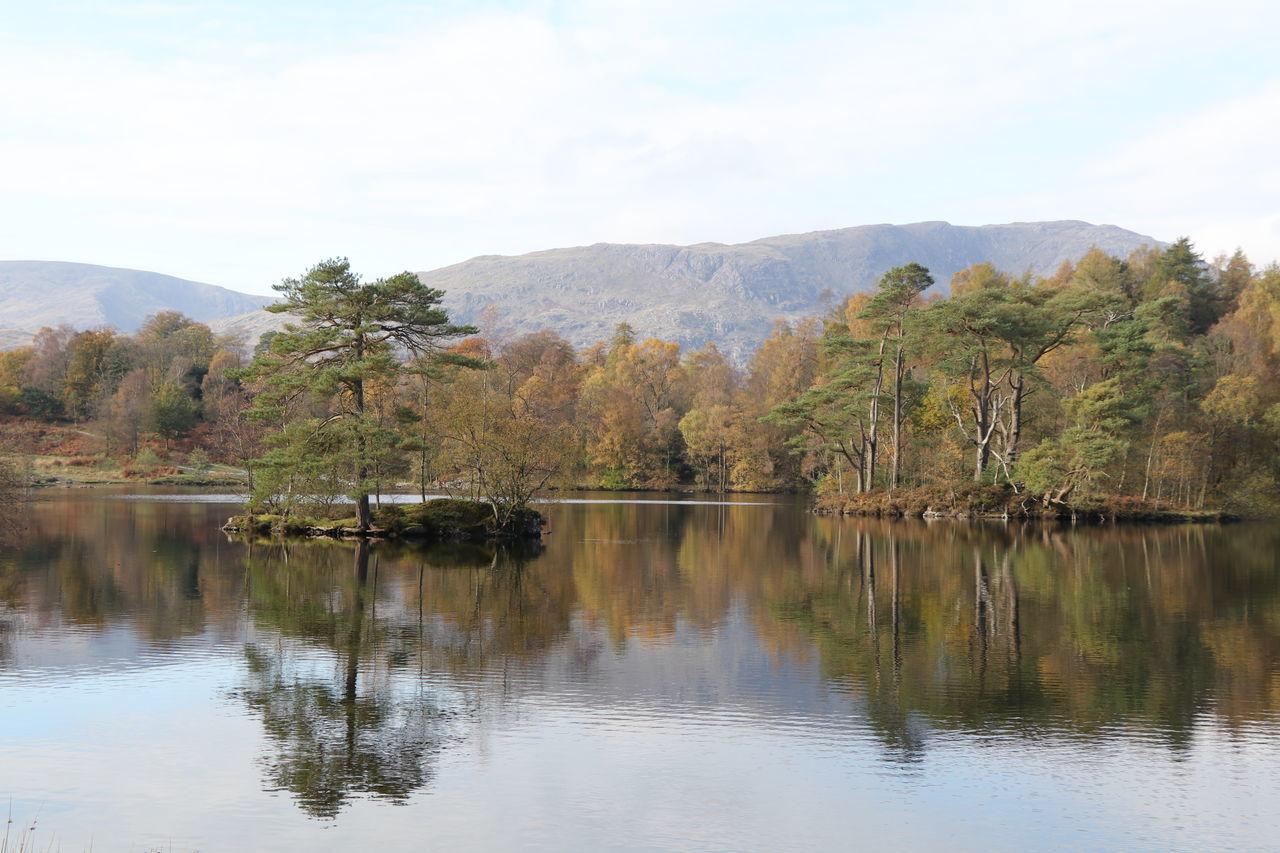 Beautiful stock photos of baum, water, reflection, tree, nature