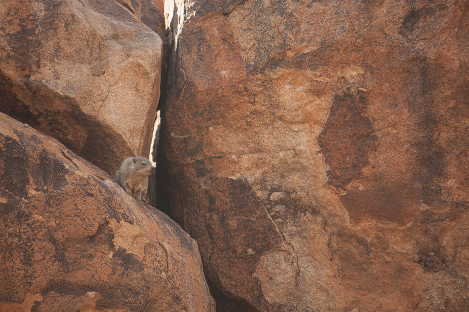 Beautiful stock photos of rock, Beauty In Nature, Close-Up, Cracked, Day