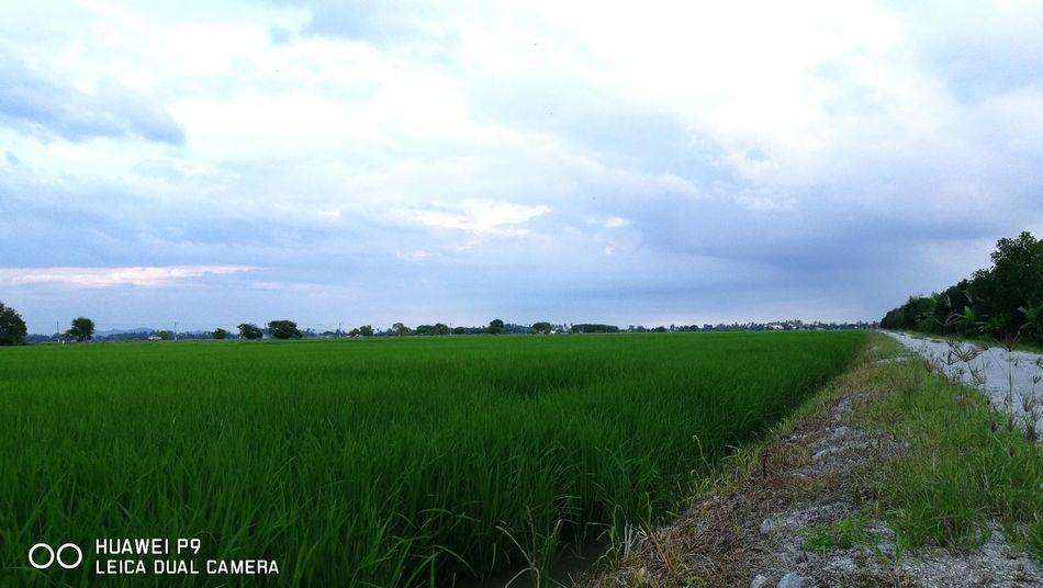 Holidayends Hometown Sky Field Nature Cloud - SkyBeauty In Nature Photooftheday HuaweiP9 Huawei Capturedonp9 Oo