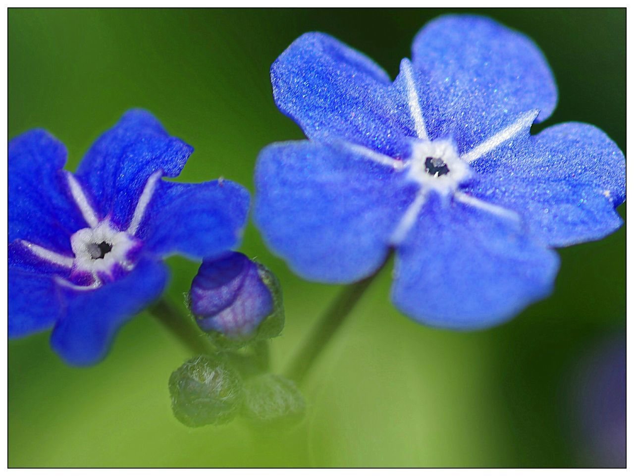 flower, purple, fragility, beauty in nature, nature, freshness, growth, close-up, blue, plant, petal, no people, flower head, day, outdoors