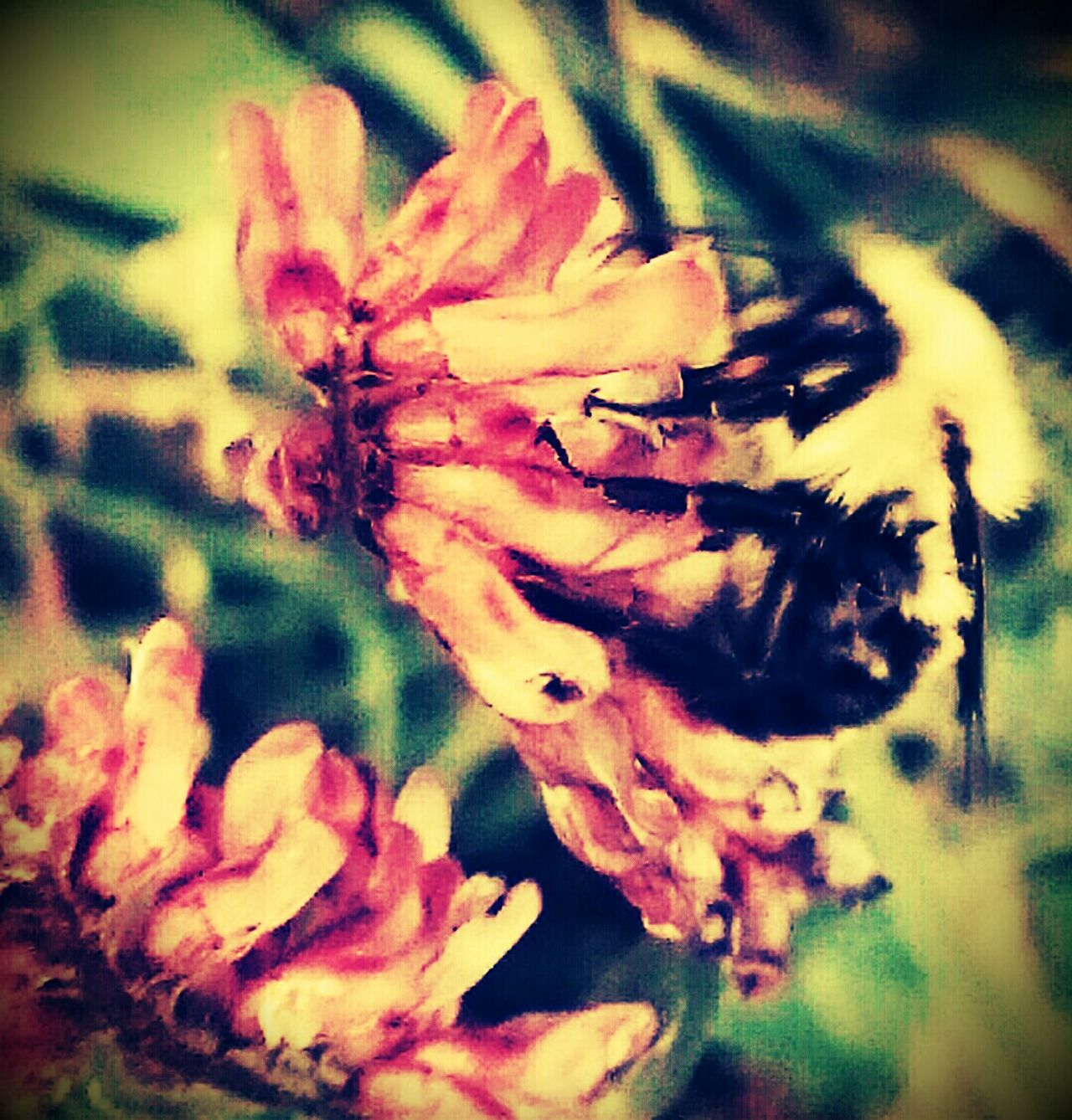 ...the bumble bee...Macro Beauty Showcase: January Beautiful World Bumble Bee Bumblebeesonflowers Flowers, Nature And Beauty Sony Xperia EyeEm Best Shots - Macro / Up Close Eyeemphotography From My Point Of View Intricate Nature