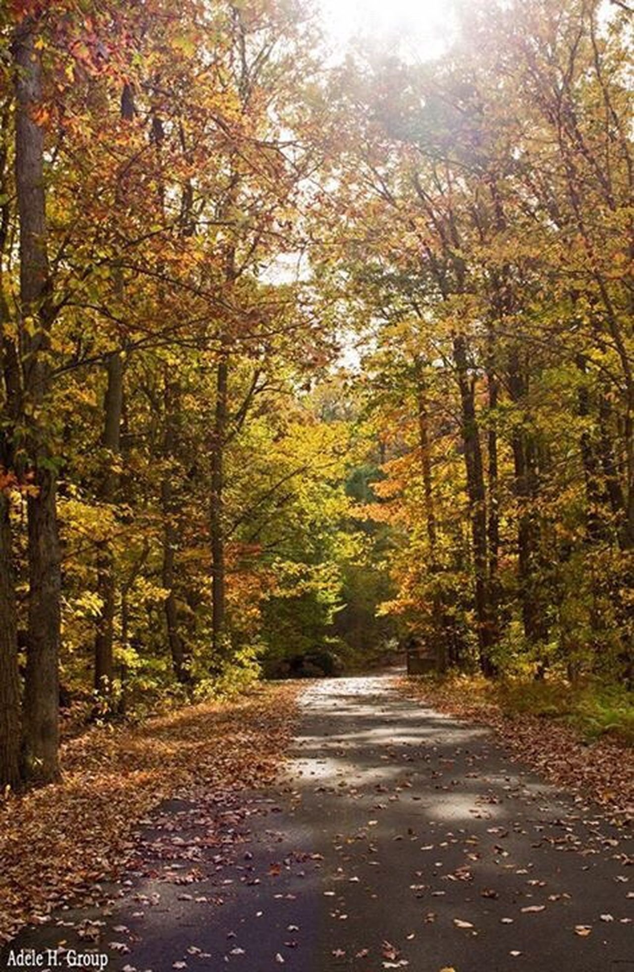 Nature Outdoors Autumn Beauty In Nature Walking Path Tranquility