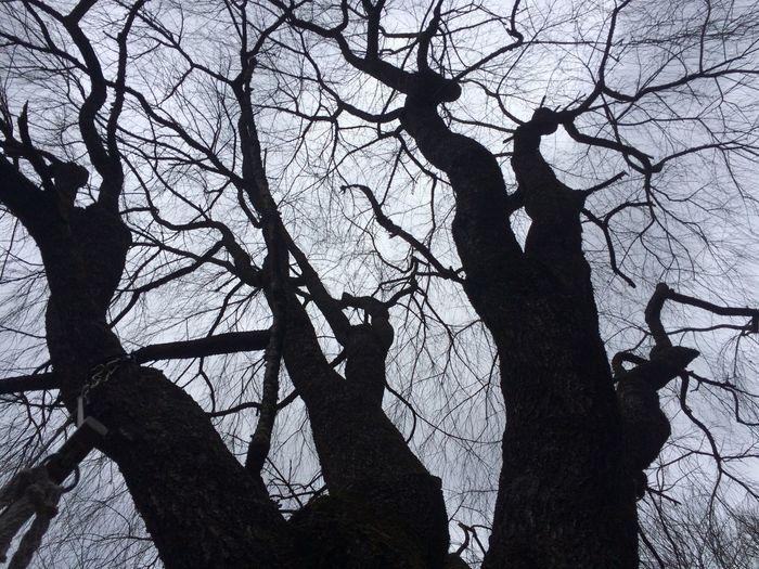 Showcase: February Tree Silhouette Good Day! Light Outside