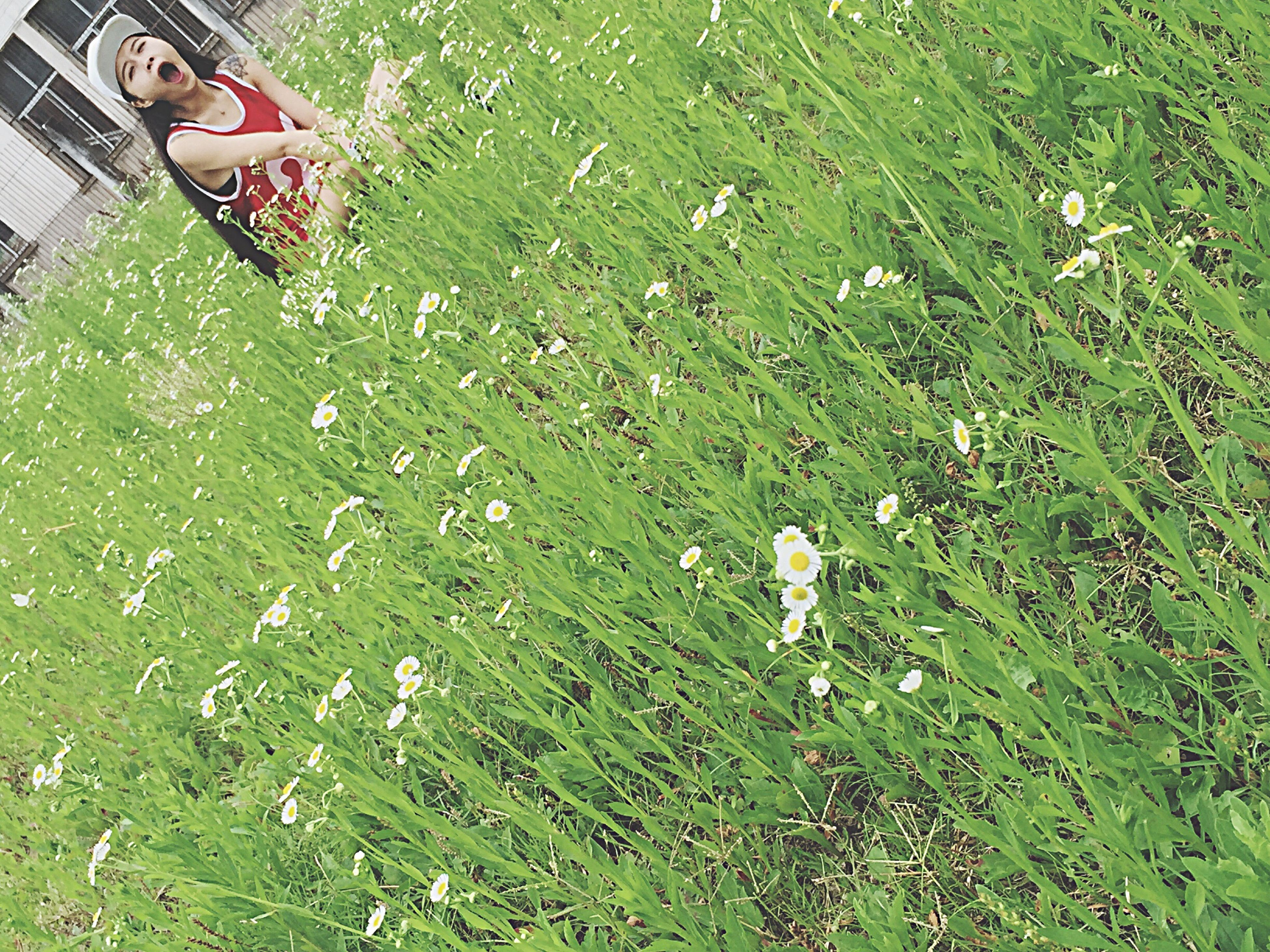 grass, high angle view, plant, green color, growth, field, grassy, front or back yard, day, outdoors, nature, leaf, sunlight, flower, lawn, park - man made space, no people, freshness, beauty in nature, relaxation