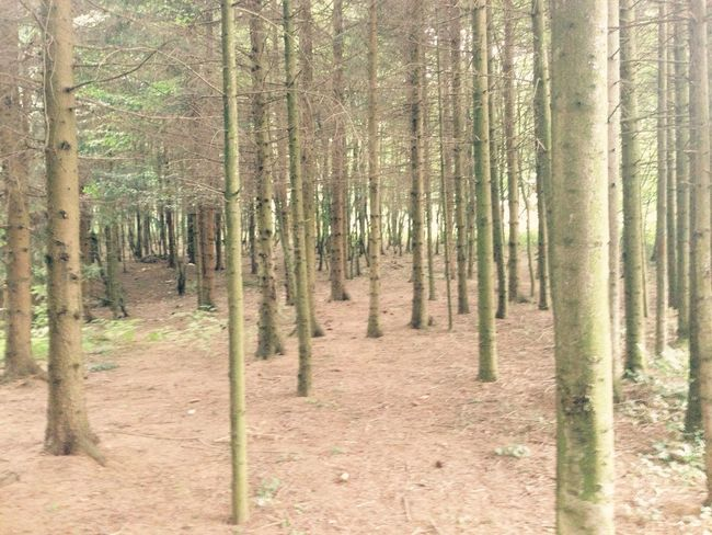 The woods are lovely, dark and deep. Beautiful Wood Tree Deep