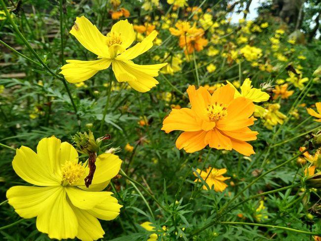 Flowers Flowers,Plants & Garden Flowerphotography Flower