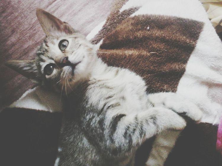 Cat♡ Jodie