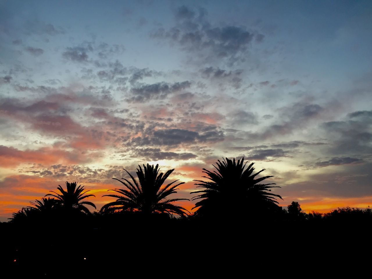 sunset, silhouette, tree, sky, beauty in nature, nature, palm tree, scenics, no people, tranquility, outdoors