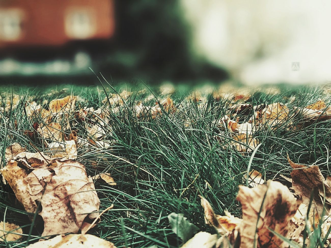 Close-up Growth Plant Nature No People Day Outdoors Horizontal Autumn Atumn Colors